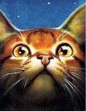 """Leafpool from  """"Starlight"""" book cover."""