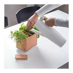 AUD29.95 IKEA Comprises: 1 plant pot (length 19 cm, width 13 cm, height 15 cm), 1 water container with lid (length 11 cm, width 5 cm, height 14 cm) and 1 saucer (length 20 cm, width 15 cm, height 2 cm). The tray helps to catch excess water.