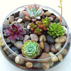 My little Succulent Garden.