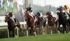 We Send Free Horse Racing and Football Tips from Our Pro Tipsters Every Day - What Would you like to Receive? Horse Racing Tips, Race Around The World, Free Horses, Horse Artwork, Chestnut Horse, Horse Shirt, Horse World, Gifts For Horse Lovers, Horse Pictures
