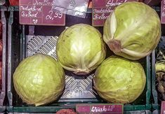 Tag des Weißkohls in den USA - National Cabbage Day - Februar Cabbage, Vegetables, February, Cabbages, Vegetable Recipes, Brussels Sprouts, Veggies, Sprouts