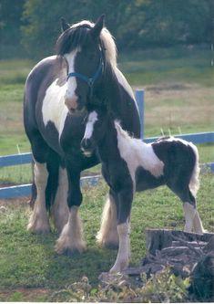 Gypsy mare and foal - from Bandera Gypsy Ranch