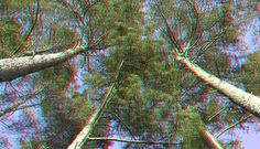 https://flic.kr/p/V4cUSK   trees Rheinsberg 3D   anaglyph stereo red/cyan glasses please! to see the depth