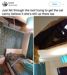 The pet rescue: 27 Pictures You Probably Won't Want To Laugh At, But Definitely Will Cool License Plates, Cat Reading, Funny Text Posts, Through The Roof, Funny Bunnies, Funny Stories, Brighten Your Day, Best Memes, Humor