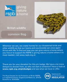 £3 GBP - Rspb Pin Badge | Common Frog | Gnah Backing Card [00864] #ebay #Collectibles British Wildlife, Pin Badges, How To Find Out, Jewellery, Cards, Ebay, Jewels, Jewelry Shop, Jewerly