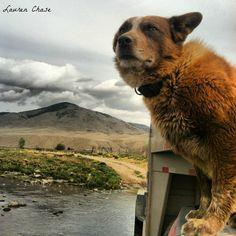 ~ Montana ranch ~ happy dog