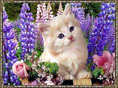 Cute kitten with purple flowers free wallpaper in free pet category