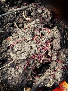 How to compost without a bin