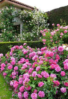 ✿❁✽Delightful✾✽❃ — Rose Garden