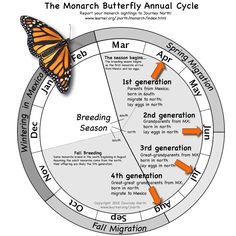 Butterfly Annual Cycle: month-by-month where are monarchs and what are they doing?Monarch Butterfly Annual Cycle: month-by-month where are monarchs and what are they doing? Butterfly Garden Plants, Butterfly Feeder, Butterfly House, Butterfly Cage, Garden Bugs, Butterfly Kisses, Monarch Butterfly Migration, Monarch Caterpillar, Hummingbird Garden