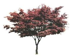 tree_42