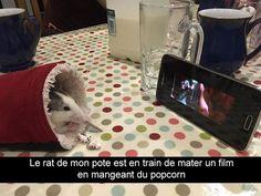Le rat de mon pote est en train de mater un film en mangeant du popcorn