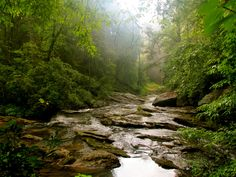 With easy access to the Chattahoochee National Forest, Blue Ridge serves as the ultimate launching pad for North Georgia adventure.