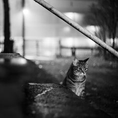 cat on yard by Jack Talland on 500px
