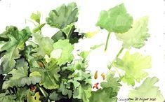 "Lis Watkins on Instagram: ""Corgette plants growing in the veg patch. Swipe to see the process.  #watercolour #sketchbook #watercoloursketchbook #drawingnature…"" Veg Patch, Watercolour, Herbs, Drawings, Nature, Plants, Instagram, Pen And Wash, Sketches"