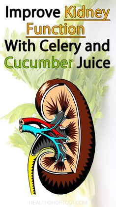 Boost kidney function with a natural combination of celery and cucumber juice. Celery juice cleanses the kidneys and has been used for other ailments, including many gastrointestinal disorders. It's a strong diuretic, which means that more blood is filtered is forced through the kidneys, making them more effective at eliminating creatinine and other waste products. Detoxify the kidneys with this simple juice recipe. Just juice a large amount of celery, combine with 1-2 cucumbers for a…