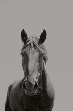 Black Horse Photograph Size 8x12 by ApplesAndOats on Etsy, $26.00