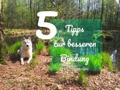 Hund und Bindung | Tipps und Tricks