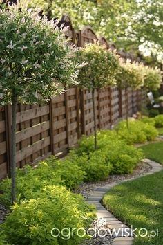 Lecę w kulki... - strona 61 - Forum ogrodnicze - Ogrodowisko