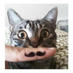 Finger Stache Cat