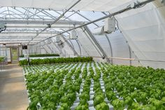 But by breaking down your available resources into input costs versus output yields, one thing becomes clear: hydroponic grow operations can produce the same amount of food, and sometimes even more, using less space. Hydroponic Systems, Hydroponics, Hydroponic Growing, Farming, Space, Food, Floor Space, Meal, Eten