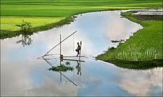 Rony: There is no source of natural water in Bangladesh. Digital Photography School, Travel Photography, Village Photography, Fish Farming Ponds, Cool Pictures, Cool Photos, Backpacking India, Village Photos, Village People