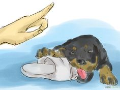 How to Train Your Rottweiler Puppy With Simple Commands: 5 Steps