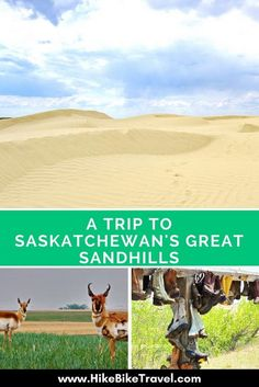 Saskatchewan's Great Sandhills, located in the western part of the province are some of the largest and most active sand dunes in Canada. They're a great family destination Top Travel Destinations, Places To Travel, Places To Go, Montreal, Tourism Saskatchewan, Vancouver, Toronto, Voyage Canada, Visit Canada