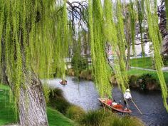 punting in Christchurch Name Change, Over The River, Avon, New Zealand, Victoria, Marketing, Park, City, Plants