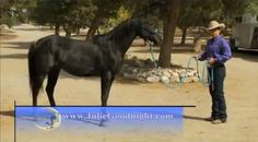 Your Horse Should Stand Still on Command Horse Behavior, Horse Videos, Horse Training Tips, Natural Horsemanship, All About Animals, All The Pretty Horses, Search And Rescue, Horse Farms, Horse Love