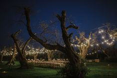 Beautiful lightning decoration for Tiffany& Damien in a gorgeous venue in Italy .Burgandy colors in the woods made their wedding magic and full of romance 💖✨ made by nocesitalienes / friends & family #woodphotoshootphotoshoot #wedding #magic #naturewedding #weddinplanner #fun #light #decoration #weddingdecoration #colorsinature #photobooth #puglia #thisispuglia #love#light #italy #puglia #kiss #couplegoal #inlove