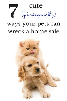 Yes, we know you love your furry friends. But not everyone feels the same way. Prospective buyers may even turn away from your home at the mere sigh of them! So, if you're looking to sell you home, try to avoid these seven deadly home-sale saboteurs. Love Your Pet, Real Estate Tips, Four Legged, Renting A House, Feels, Teddy Bear, Moving Tips, Things To Sell, Friends