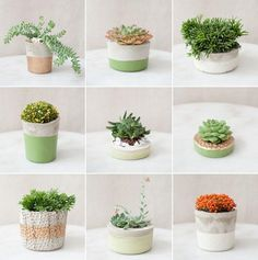 Other tiny succulents in tiny planters