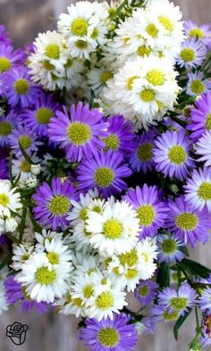 Love it or hate it! aster in white or purple can usually be acquired in January to add some muted soft purple or white to your wedding flowers. My Flower, Fresh Flowers, Colorful Flowers, Flower Power, Beautiful Flowers, Happy Flowers, Wild Flowers, Mother Nature, Planting Flowers