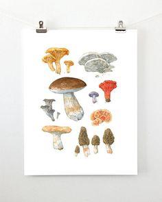 Edible Mushrooms Watercolor Art Print Woodland Kitchen Wall