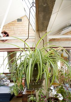 Hanging plants Hanging Plants, House, Home, Homes, Houses
