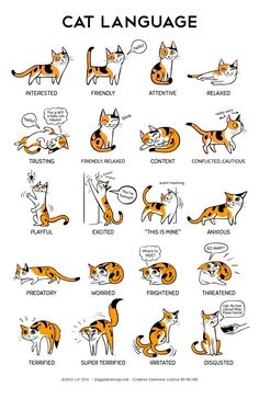 NEW: Cat Language!A big thank you to the Training and Behavior Dept of Oregon Humane Society for their help with cat body language information. I have been a cat-less dog person for many many years, so some of this stuff was new to me! For example, I didn't know that cats also emoted with their WHISKERS (relaxed = fanned out and horizontal; anxious = pulled backwards) Pupils, ear positions, body weight, and tails are the other indicators of how a cat is feeling. *As with dog body language…
