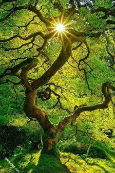 Amazing Photography Of Nature