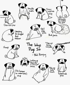 One of the many things I love about pugs is the funny way they sit. Sunny is a sloppy sloucher and slumper while Rosy is a tucked duck. Pug Illustration, Pugs And Kisses, Pug Art, Cute Pugs, Funny Pugs, Pug Puppies, Pug Love, Dog Quotes, Cute Animals