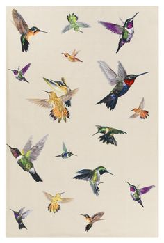 họa tiết chim