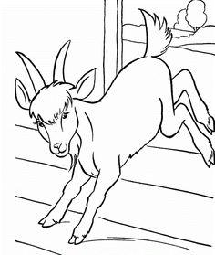 Goats Running Tight