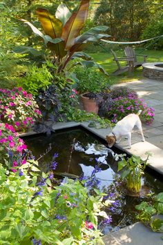 Pond. Backyard with pond. Hursthouse Landscape Architects and Contractors.