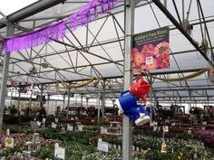 Proven Winners at Calloway's Nursery in North Plano Proven Winners, This Is Us, Fair Grounds, Nursery, Flowers, Plants, Baby Room, Child Room, Plant