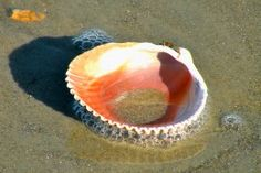 Shell on the Outer Banks