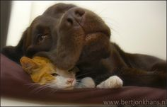 http://bertjonkhans.nl/hesselenhannes/ friends, dog, cat, hessel, hannes, hond, kat, vrienden,friendship,dog,cat,dogs,cats,hesselenhannes,hessel en hannes, hessel and hannes,
