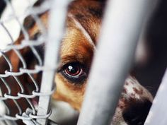 THUGS who torture animals should face tougher penalties as many turn into rapists and killers, a new study reveals today.
