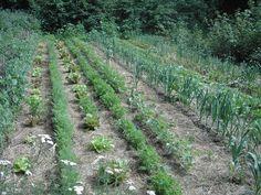 Planungsbeispiel für einen Hausgarten Permakultur-Design, A-3970 Harbach 683 m Seehöhe Projektziel ist eine teilweise Selbstversorgung aus dem eigenen Garten mit Obst, Beeren, Kräutern und extensiv…
