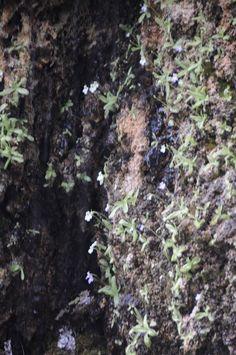 Πάντα βρέχει How To Dry Basil, Herbs, Herb, Medicinal Plants