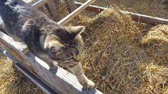 Cat Proof Quail Cage