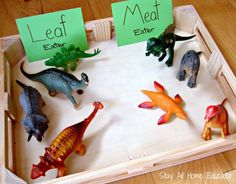 Leaf or meat eating dinosaurs - Stay At Home Educator A collection of nine fun and engaging dinosaur themed preschool activities Dinosaur Theme Preschool, Preschool Themes, Preschool Science, Preschool Lessons, Preschool Classroom, Preschool Crafts, Dinosaur Crafts Kids, Daycare Curriculum, Homeschooling
